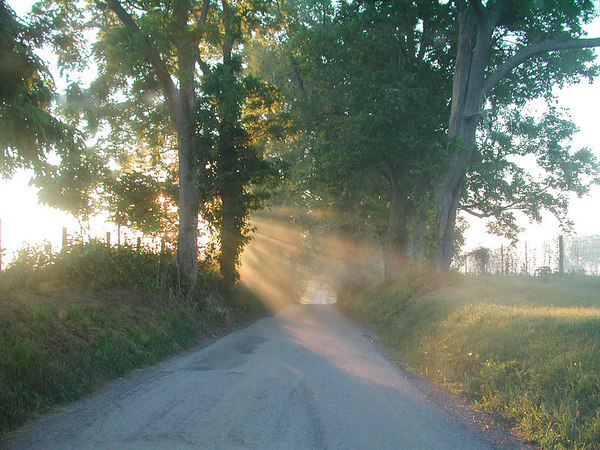 Sunlight streaming through the trees on a country lane in the Kentucky Bluegrass.    One of the grand prize winning photographs on NikonNet.