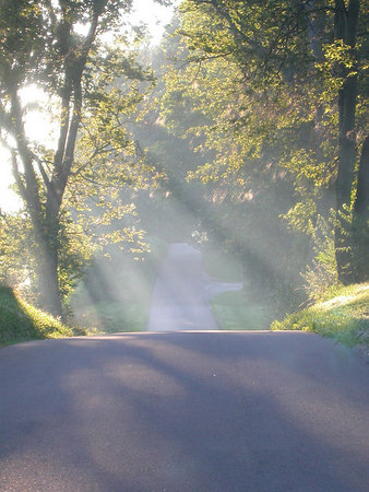 Sunlight streaming through the trees on a country lane in the Kentucky Bluegrass.