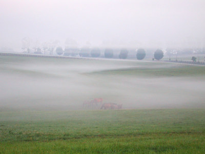 Foggy pasture in the Kentucky Bluegrass with horses grazing and the fog separated into layers.  One of the grand prize winning photographs on NikonNet.