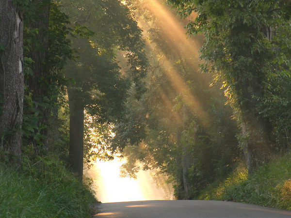 Sunlight streaming  through the fog and trees on a country lane in the Kentucky Bluegrass near Lexington