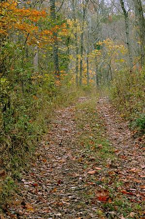 Autumn on Lower Howard's Creek