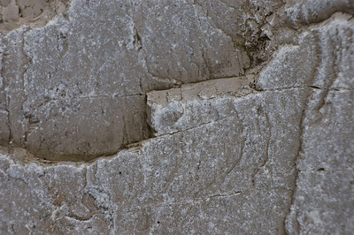 Stock image of texture and patterns in limestone.  Photographed in the Lower Howards Creek Nature and Heritage Preserve in the Bluegrass region of Kentucky USA.