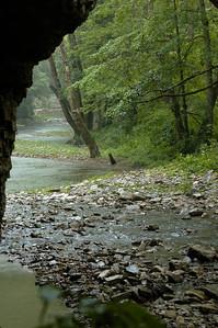 Summer scenes on Lower Howard's Creek