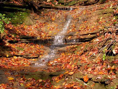 Water cascading down a small stream in the Lower Howard's Creek Nature and Heritage Preserve located in the Bluegrass Region of Kentucky, USA.