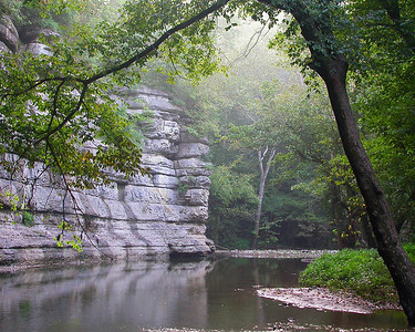 Limestone palisades on an early summer morning in the Lower Howard's Creek Nature and Heritage Preserve.