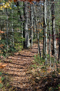 Sheltowee Trace National Recreation Trail  in the Red River Gorge Geological Area in the Daniel Boone National Forest of Kentucky