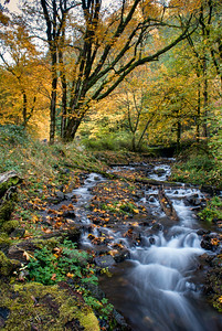 Columbia River Gorge Stream