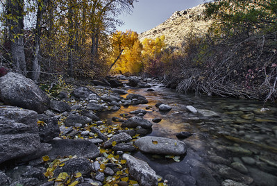 Lamoille Creek Eastern Nevada