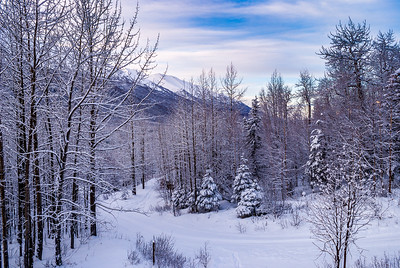 Winter in Alaska 1