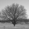 Lone Tree Photograph