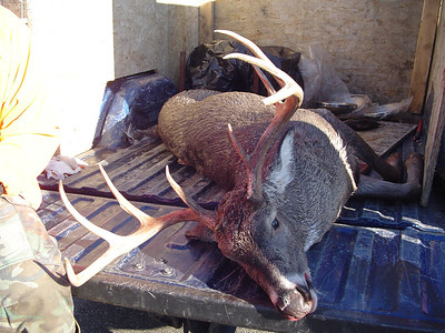 Deer Huntng in Maine