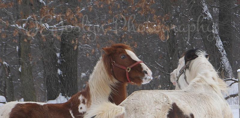 Paint and Joe  (closeup of previous photo)
