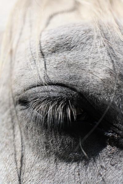 Forestville Horse Trip 5-28-2012