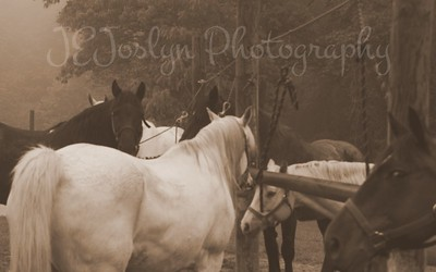 Forestville Horse Camp - May 2015