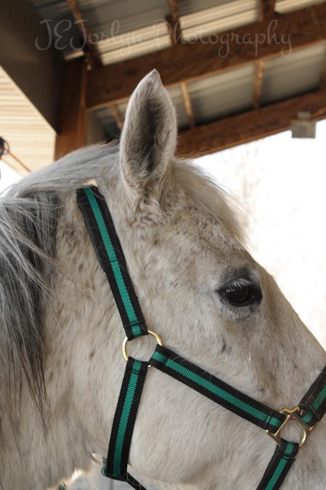 Bravo, Jackies horse, at  Bunker Park Stables, Minnesota