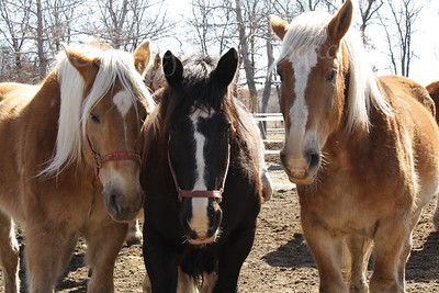 Friends watching me at Bunker Park Stables, Minnesota