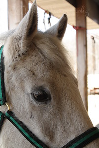 Bravo, Jackies horse, at  Bunker Park Stables, Minnesota