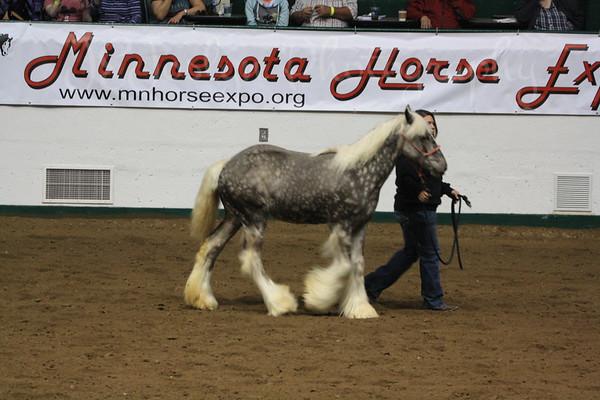 MN Horse Expo-2015