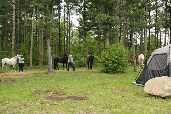 Camp grounds-tents, pine trees, tie wires and poles for the Horses