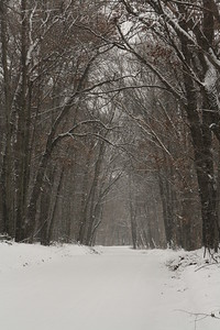 Snow and warm temps allowed taking a slow ride and many photographs.  Wonderful morning spent here.