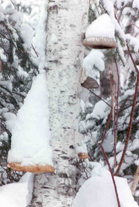 Snow on the Gun Flint Trail.  That'd be Grand Marais, Minnesota for those that don't know.