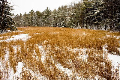 """XC skiing at the Fore River Sanctuary in Portland Maine During the """"Valentines Day Blizzard"""" of 2007.  2.14.07.  During this storm up to one foot of snow fell on the city of Portland and surrounding areas."""