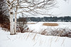 Spear Farm Estuary Preserve, Yarmouth, Maine.  Photograph taken by Portland, Maine based photographer Jeff Scher.