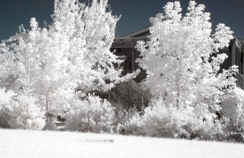 IR image using a Sony Alpha A100. This is one of my very first IR images I took with the Sony A100.<br /> <br /> Camera placed on the ground to steady it as it was a little windy this day. The black long item in the grass is the sprinkler.<br /> <br /> This is part of my backyard - the house is the neighbours house.