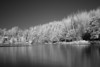 Shoreline of Ghost Lake. IR photo taken with a Canon 40D, and a Hoya R72 IR filter on a Sigma 50mm 2.8 lens. Camera kept steady by placing it on the ground for the 10 second exposure.