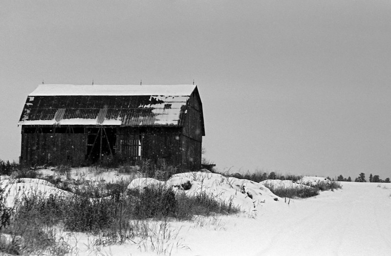 Local barn while the snow falls.<br /> <br />  Taken a few photos of this barn using different cameras and films, this time it was with a Maxxum 7 with a Sigma 28-300 mm lens loaded with Arista Ultra (Czech Republic) 200 iso b&w film of which I developed in Kodak D76 1:1 for 8.5 minutes at 20C.