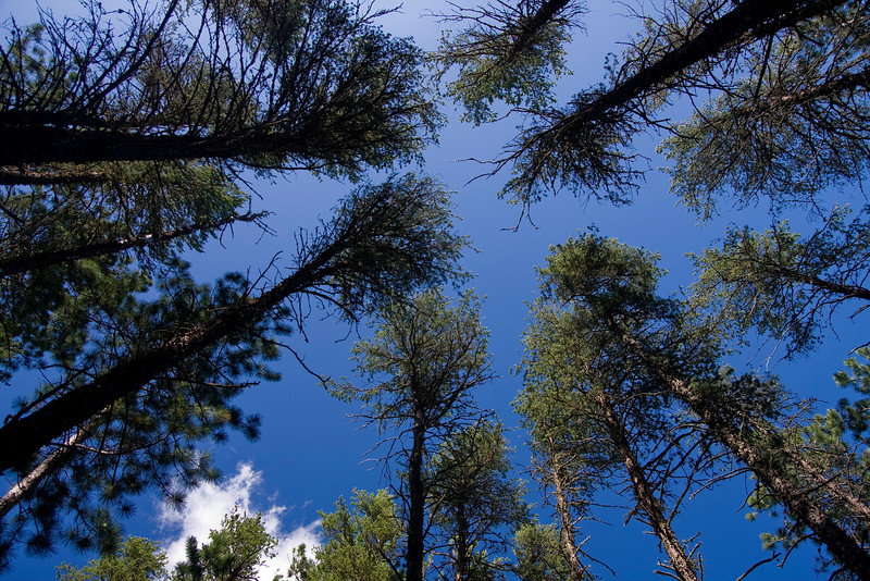 While in Quetico Park, we camped on a small island and this was the view looking straight up from the campsite.