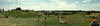 Panorama of Cox Farms made from 5 separate photos.  All shot with the Coolpix P80.