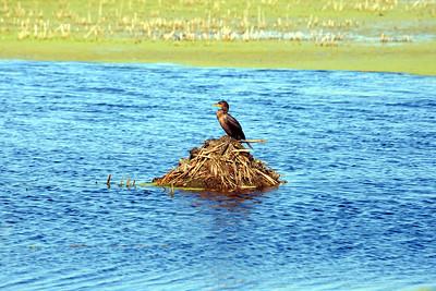 Montezuma Wildlife Refuge