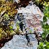 Tanypteryx hageni Black Petaltail (12x16) 4800x3614 300ppi