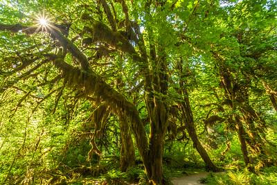 Sun in the Rainforest