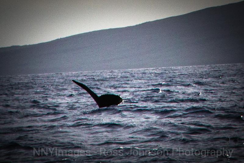 20181056 - Road to Hana Whale Watch - Maui