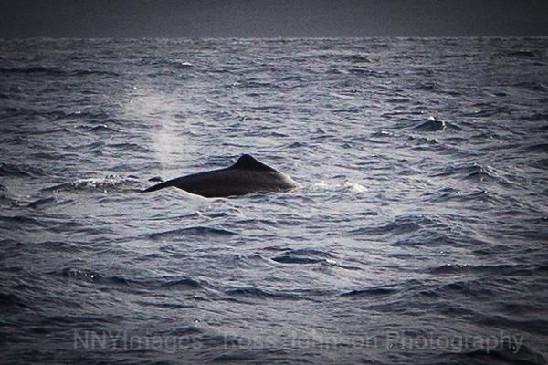 20181051 - Road to Hana Whale Watch - Maui