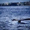 20181149 - Road to Hana Whale Watch - Maui