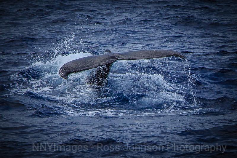 20181094 - Road to Hana Whale Watch - Maui