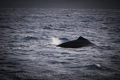 20181049 - Road to Hana Whale Watch - Maui