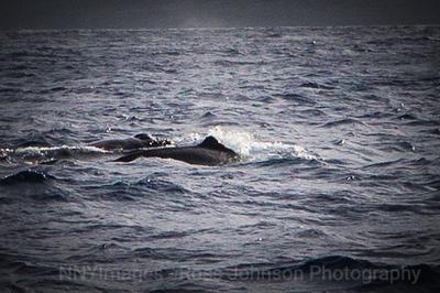 20181054 - Road to Hana Whale Watch - Maui
