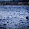 20181133 - Road to Hana Whale Watch - Maui