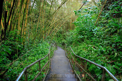 20181630 - Akaka Falls State Park - Hawaii