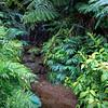 20181661 - Akaka Falls State Park - Hawaii