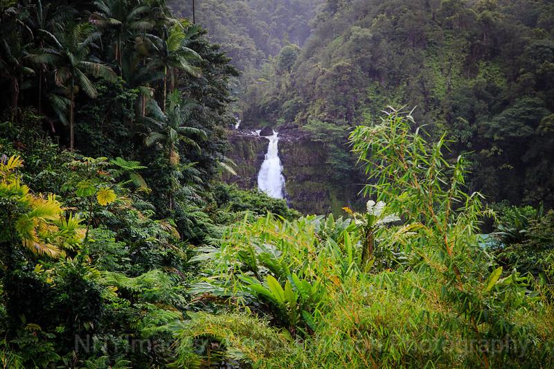 20181625 - Akaka Falls State Park - Hawaii