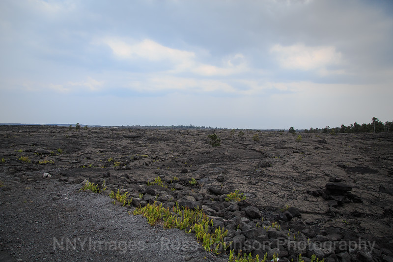 20181589 - Volcano National Park - Chain of Craters Road - Hawaii