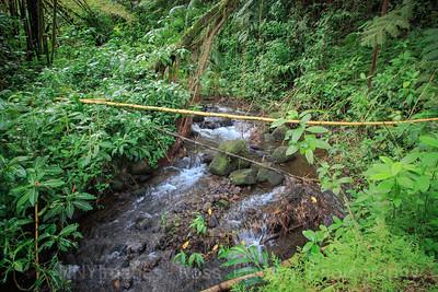 20181633 - Akaka Falls State Park - Hawaii