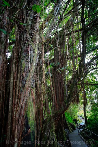 20181641 - Akaka Falls State Park - Hawaii