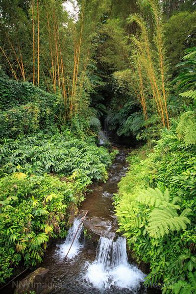 20181671 - Akaka Falls State Park - Hawaii