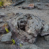 20181587 - Volcano National Park - Chain of Craters Road - Hawaii